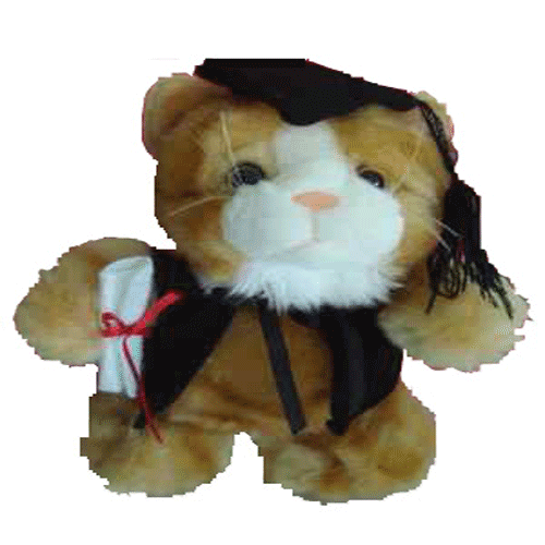 Graduation Cat 24cm 'Zachariah' - Clearance Item